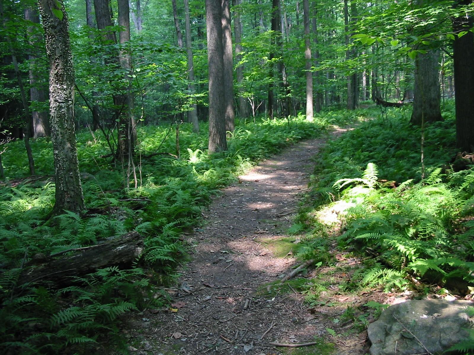 Photo of Favorite Walks in Ashland