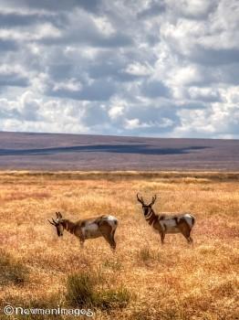hart mountain antelope refuge08292010_00_webcrop