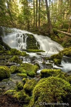 Pearsony Falls Sue Newman