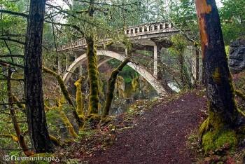 Prospect Bridge Sue Newman