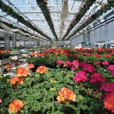 greenhouses_10