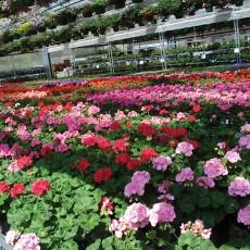 greenhouses_12