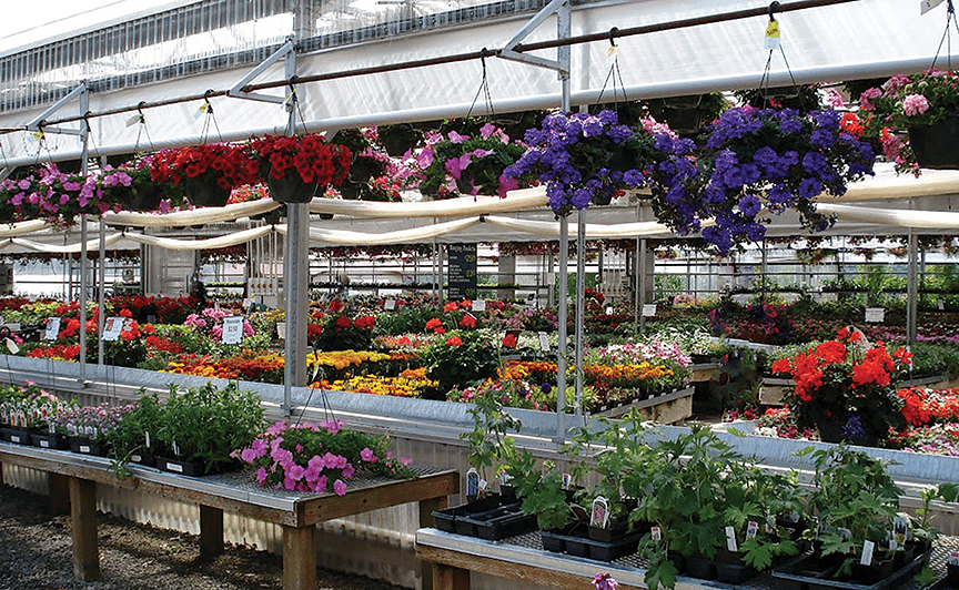 Photo of From The Greenhouses: Time For a Visit