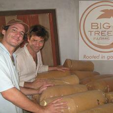 Big Tree13