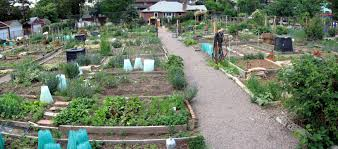 Photo of How To Create A Community Garden
