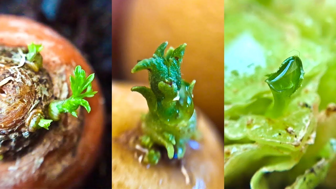 Photo of 14 Store Bought Vegetables & Herbs You Can Regrow