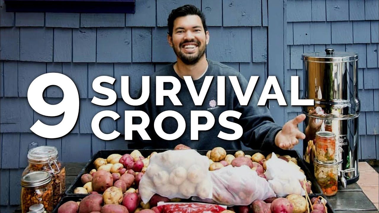 Photo of 9 Survival Gardening Crops to Grow in a Post Apocalyptic World