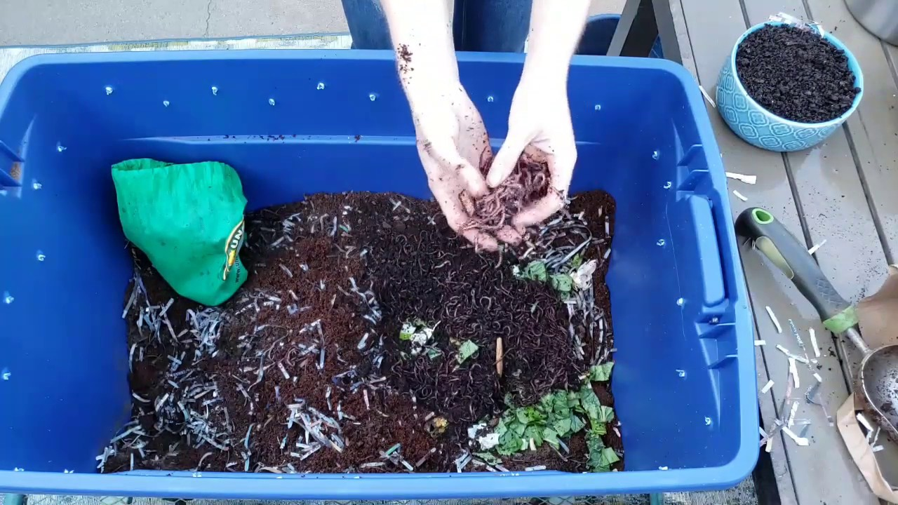 Photo of Vermicomposting 101: How to Create & Maintain a Simple Worm Bin