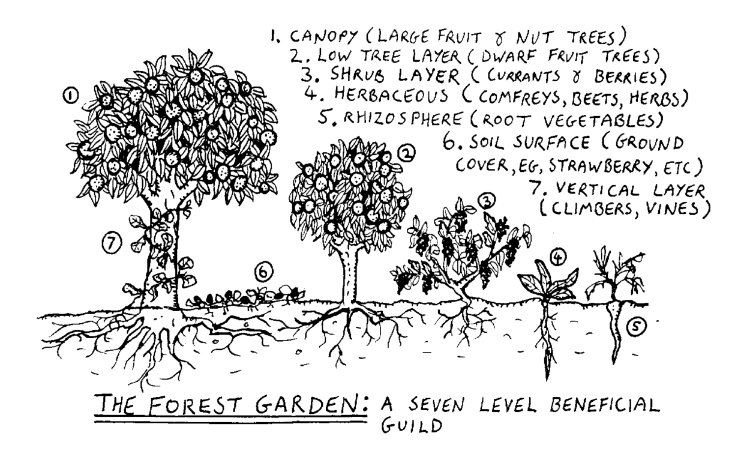 Photo of How to Plant a Food Forest This Winter