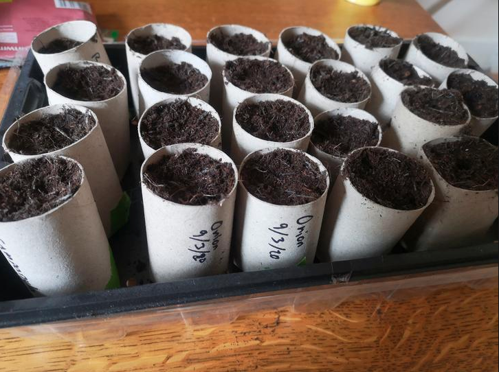 Photo of Use your stockpiled TP tubes to grow a garden