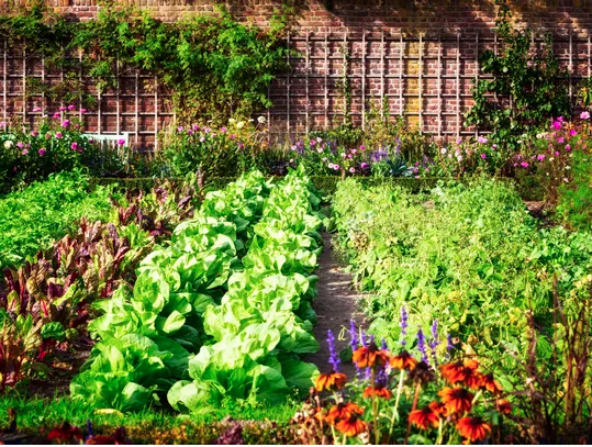 Photo of Vegetable gardens for beginners: 6 steps to get started