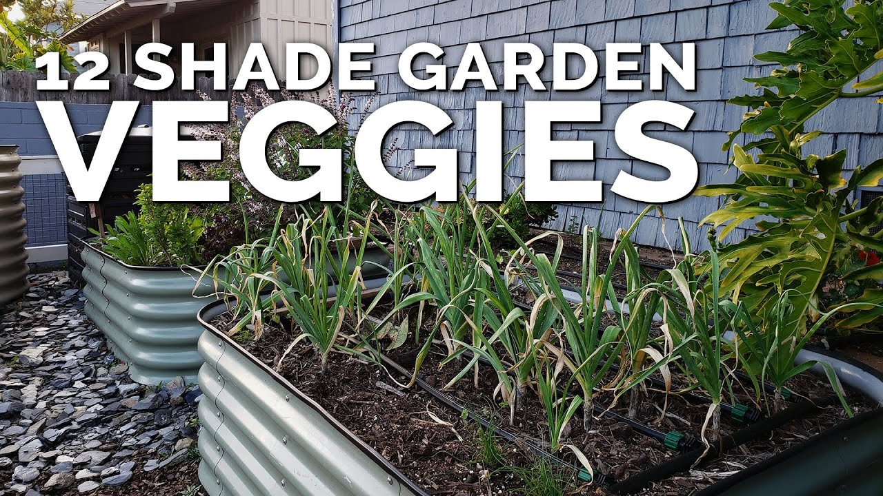 Photo of 12 Perfect Vegetables To Grow in a Shady Garden Space
