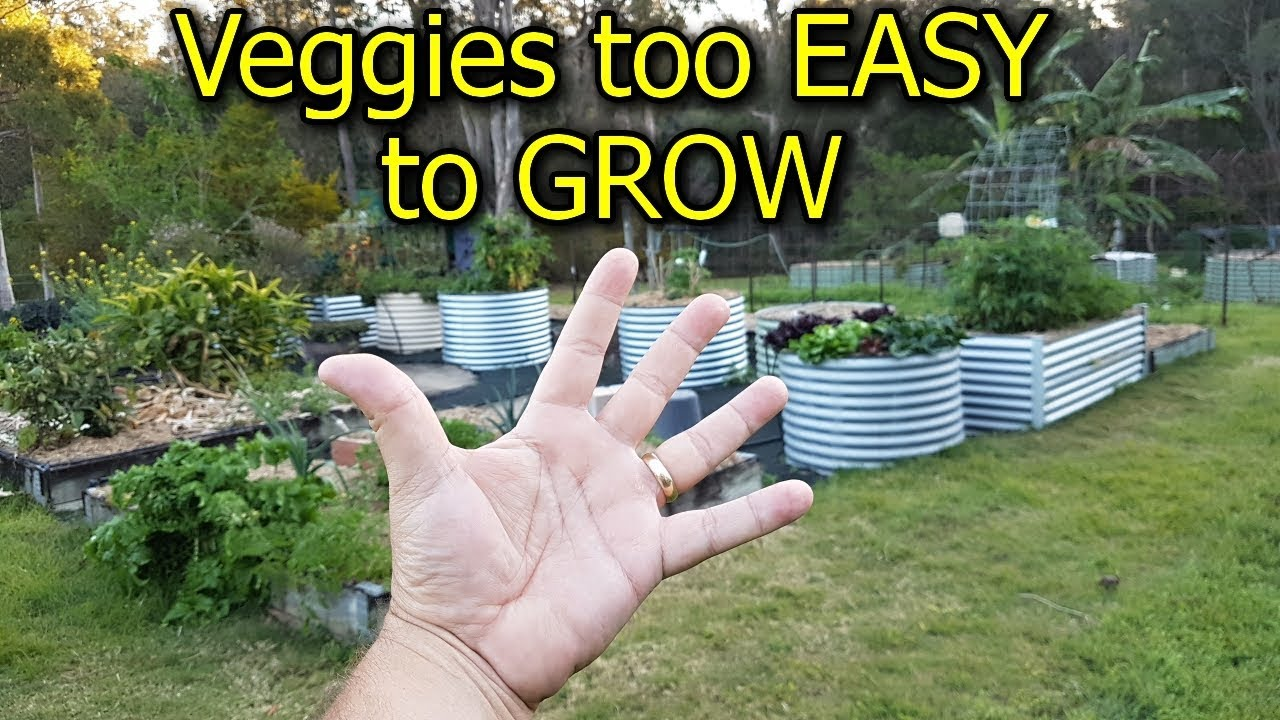 Photo of 5 Vegetables that are too EASY to GROW in the Garden