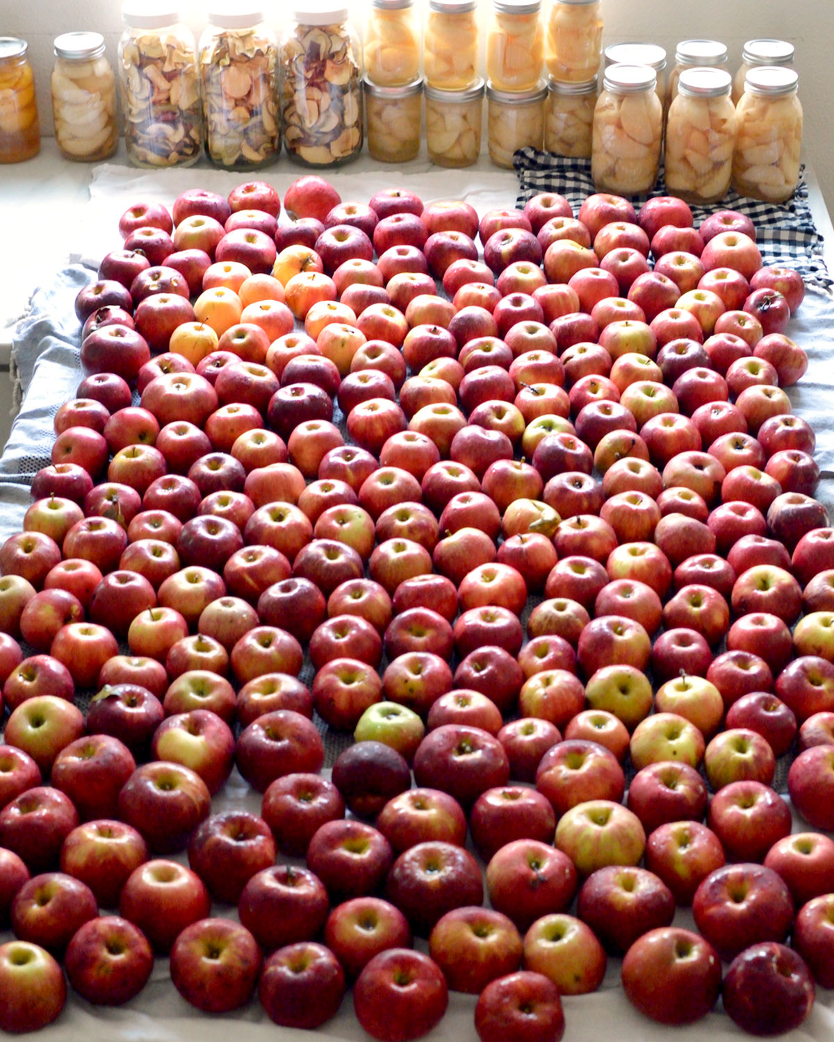 Photo of How Much to Plant for a Years Supply of Fruit